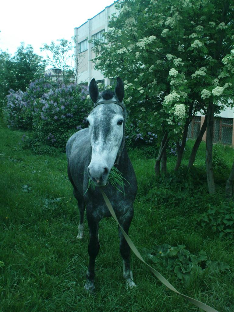 Лошадка обслюнявила меня