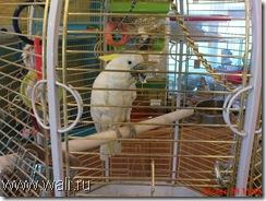 Попуга в магазине оч даже умненькая
