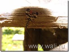 Эта мураха - верх моего фото-мастерства!
