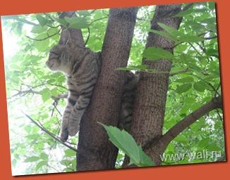Он решил отдохнуть на дереве. Полюбоваться природой и птичками.